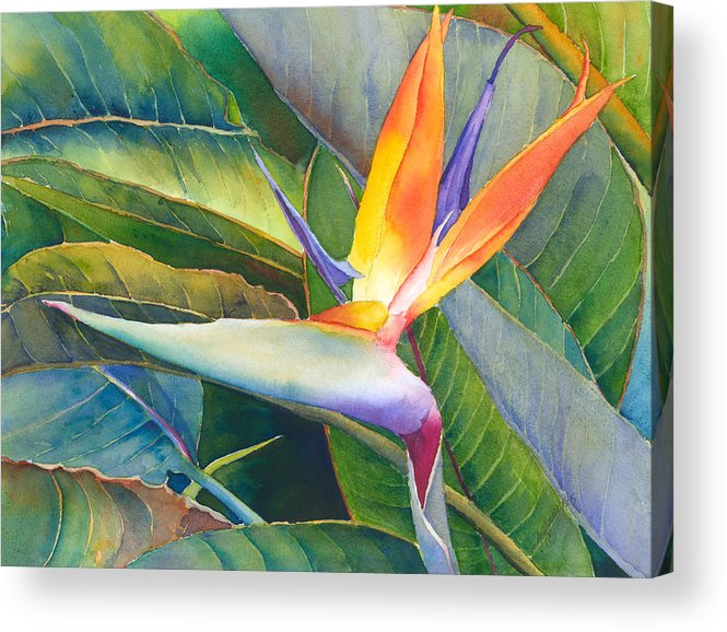 Bird Of Paradise Acrylic Print featuring the painting Its A Bird by Judy Mercer