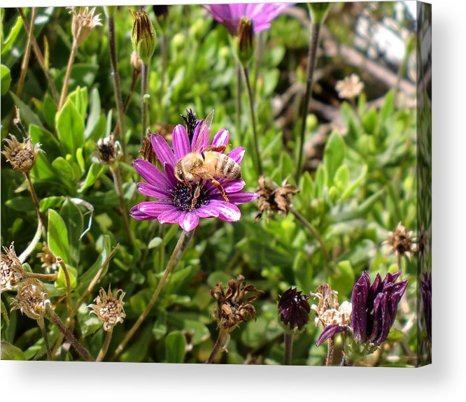 Bee Acrylic Print featuring the photograph Just Bee by Keeza Starr