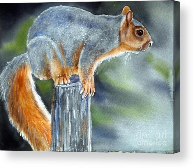 Squirrel Acrylic Print featuring the painting Just Do It by Patricia Pushaw