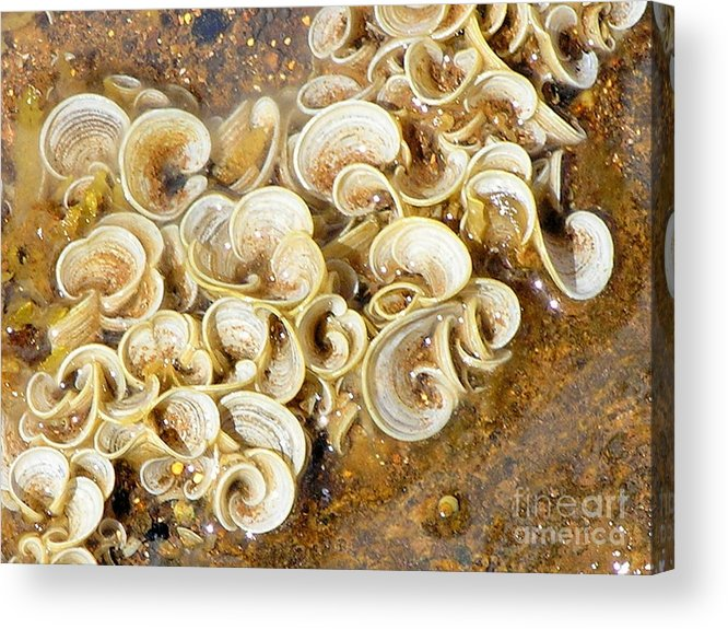 Sea Life Acrylic Print featuring the photograph Life On The Rocks by Mary Deal