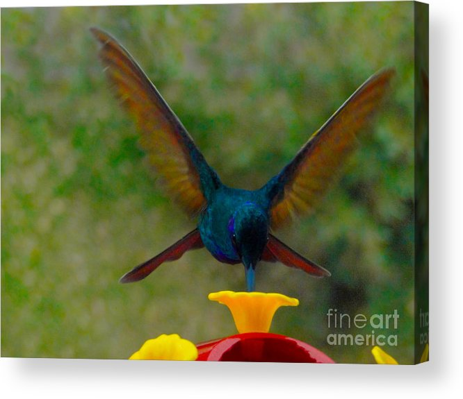Cuenca Acrylic Print featuring the photograph Look Ma  No Hands by Al Bourassa
