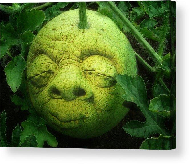 Melon Acrylic Print featuring the photograph Melon Head by Jack Zulli