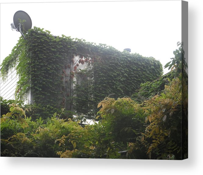 Ivy Acrylic Print featuring the photograph Microwave And Ivy by James Potts