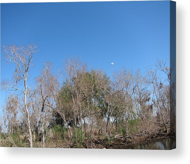 New Acrylic Print featuring the photograph New Orleans - Swamp Boat Ride - 121271 by DC Photographer