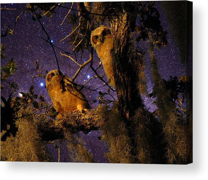 Phil Acrylic Print featuring the photograph Night Owls by Phil Penne