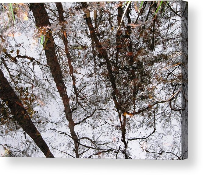Old Growth Cypress Photograph Acrylic Print featuring the photograph Old Growth Cypress Reflection by Janet Wagner