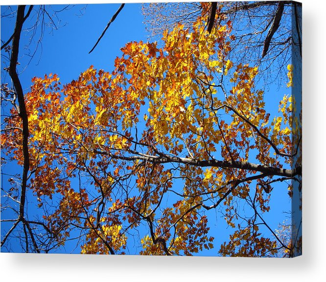 Old Acrylic Print featuring the photograph Old Rag Hiking Trail - 121218 by DC Photographer