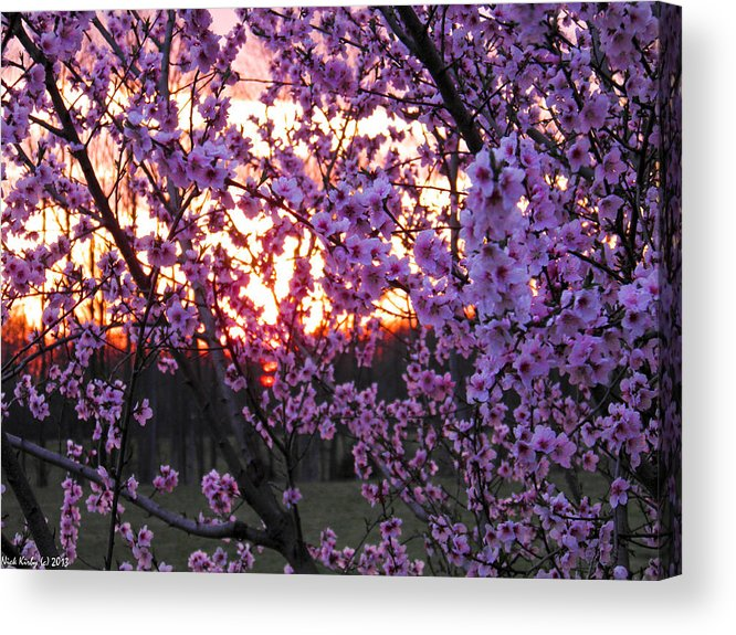 Peach Acrylic Print featuring the photograph Peachy Sunset 1 by Nick Kirby