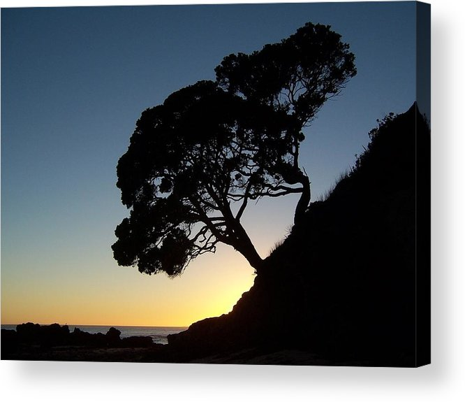 New Zealand Acrylic Print featuring the photograph Pohutukawa Trees At Sunrise by Peter Mooyman