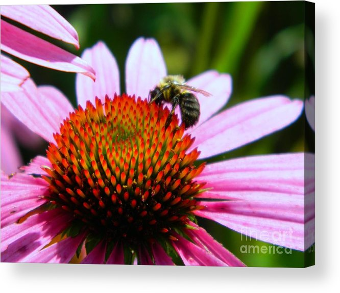 Pollinator Acrylic Print featuring the photograph Pollinator by K L Roberts