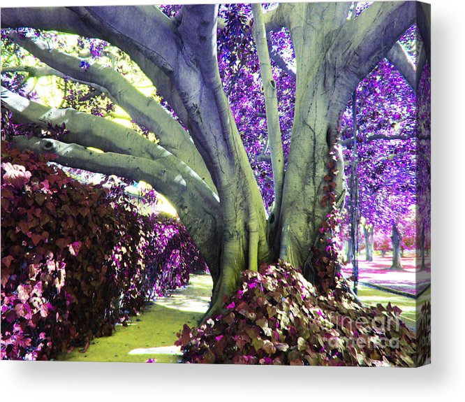 Multicolor Tree Acrylic Print featuring the photograph Psychedelic Purple Fuschsia Earthy Tree Street Landscape Los Angeles Cool Artistic Affordable Art by Marie Christine Belkadi
