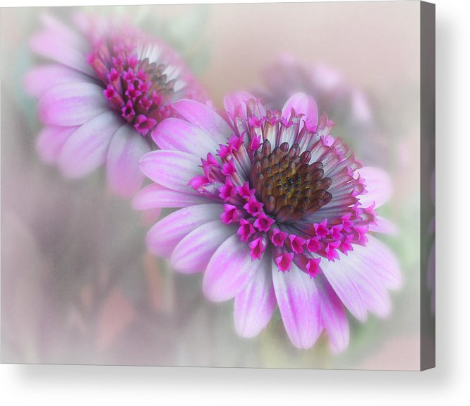 Flower Acrylic Print featuring the photograph Purple Blooms by David and Carol Kelly