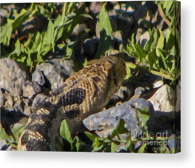Snakes Acrylic Print featuring the digital art Rattle Snake by Danny Campbell