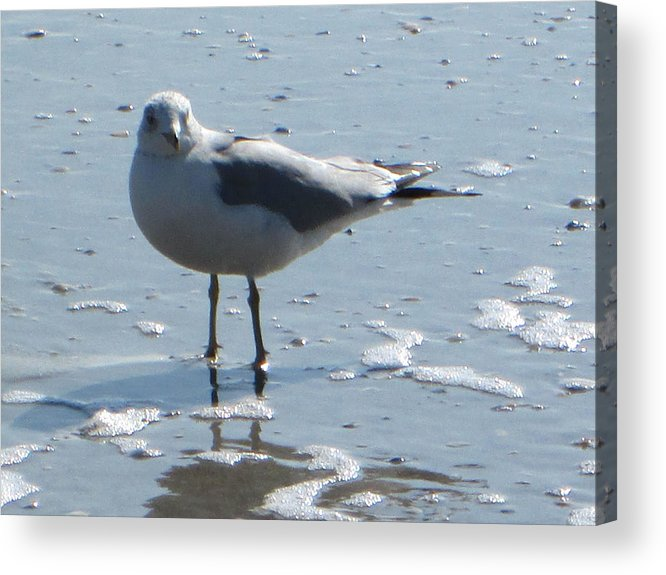 Seagull Acrylic Print featuring the photograph Seagull by Silvie Kendall
