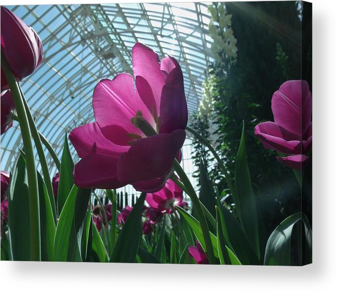 Flower Acrylic Print featuring the photograph Sun Kissed by Jared Best
