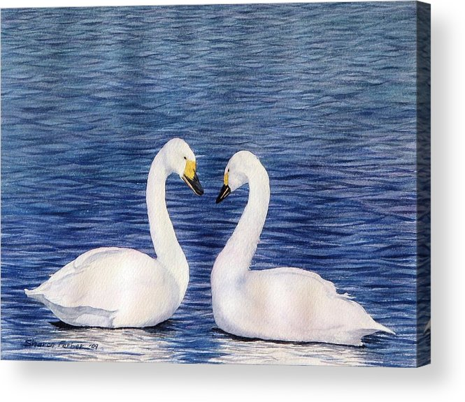 Swans Acrylic Print featuring the painting Swan Love by Sharon Farber
