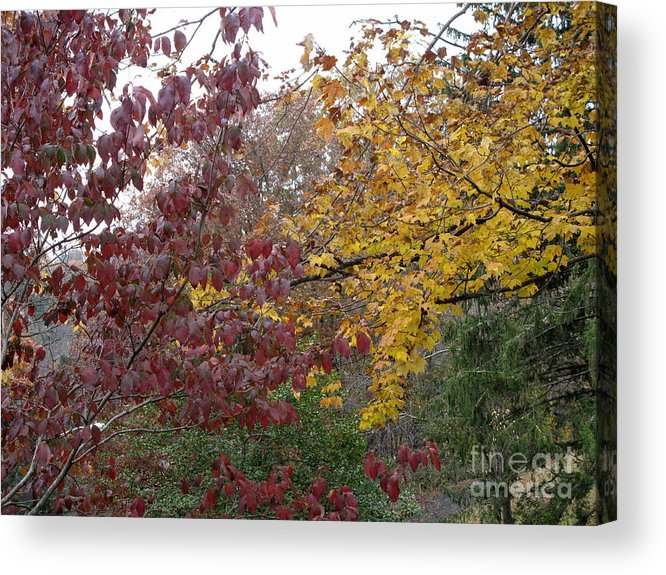 Autumn Acrylic Print featuring the photograph The Dogwood And The Maple Leaves by Sandy McIntire