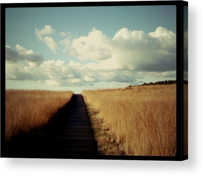 Road Acrylic Print featuring the photograph The Road Rarely Taken by Beril Sirmacek