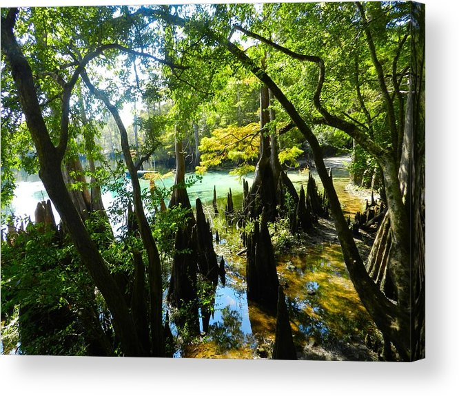 Florida Swamp Acrylic Print featuring the photograph The Swamp By The Springs by Julie Dant