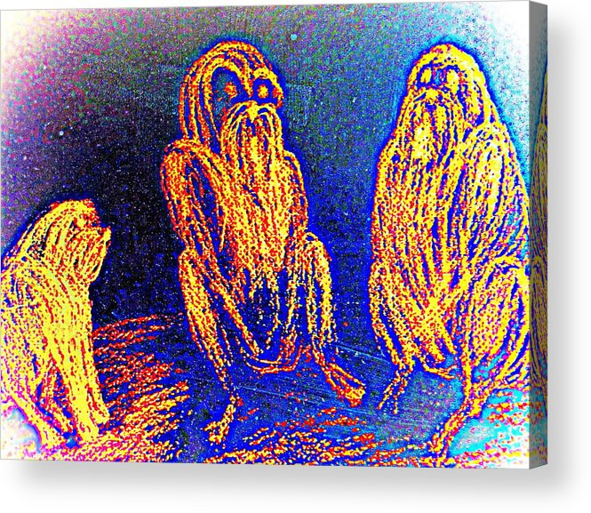 Apes Acrylic Print featuring the drawing The Three Apes Are Discussing Important Matters by Hilde Widerberg