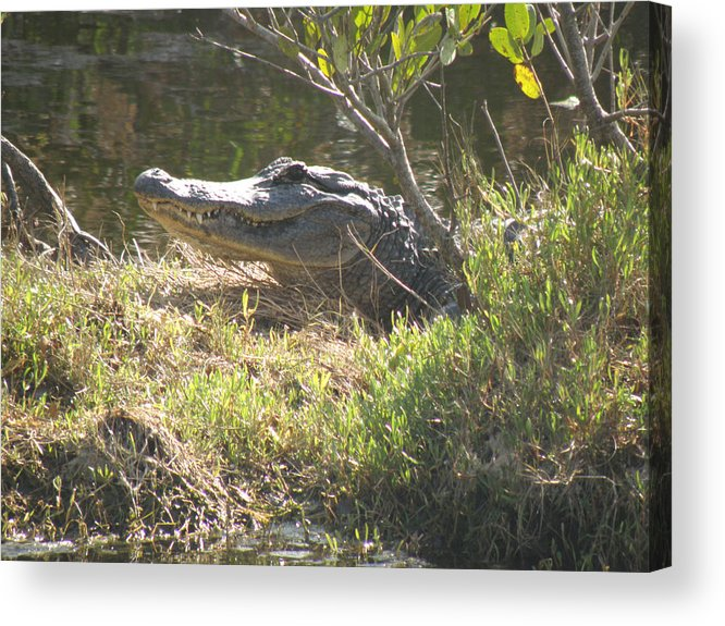 Alligator Acrylic Print featuring the photograph The Welcome Grin by Ted Denyer