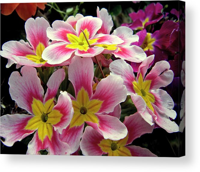 Flower Acrylic Print featuring the photograph Under The Sunlight by Zafer Gurel