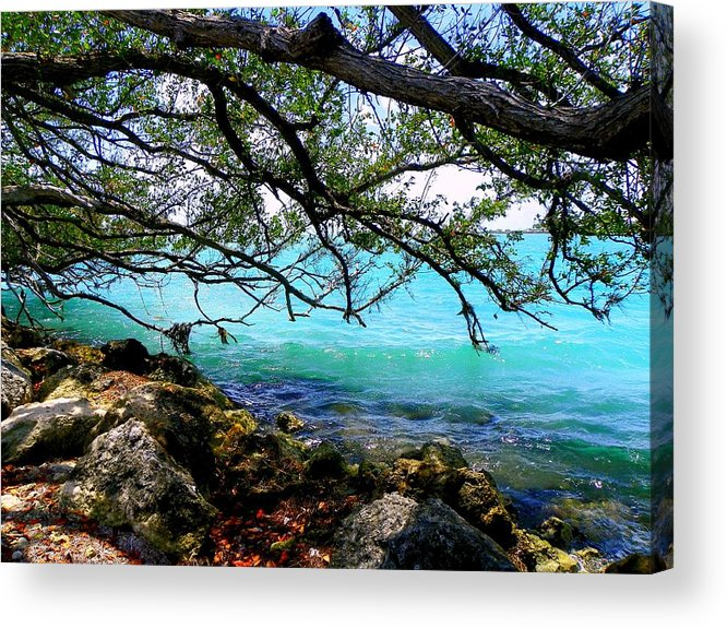 Florida Keys Acrylic Print featuring the photograph Underneath by Karen Wiles