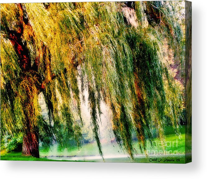Weeping Willow Tree Acrylic Print featuring the photograph Weeping Willow Tree Painterly Monet Impressionist Dreams by Carol F Austin