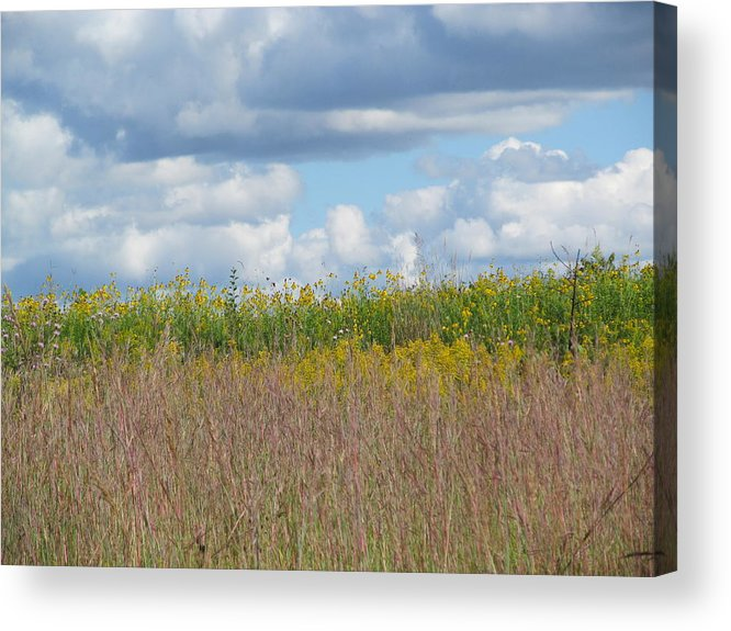 Park Acrylic Print featuring the photograph Wild Grass Two by Tina M Wenger