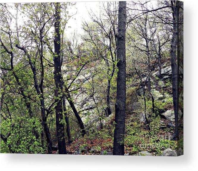 Trees Acrylic Print featuring the photograph Wild Manhattan by Sarah Loft