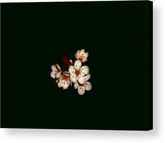 Flower Acrylic Print featuring the photograph 006simple by Robert Cunningham