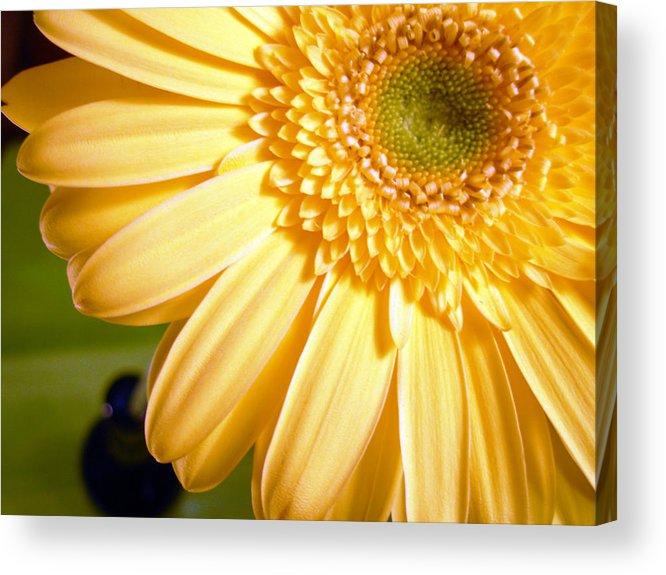 Gerbera Photographs Acrylic Print featuring the photograph 0741.2 by Kimberlie Gerner
