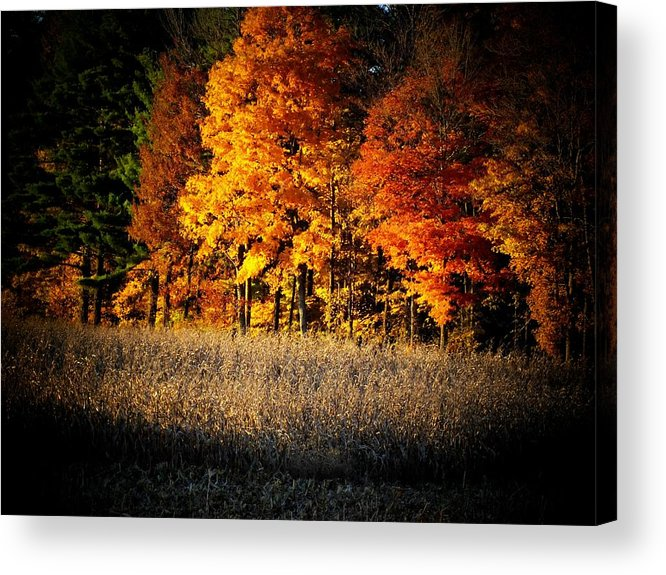 Trees Acrylic Print featuring the photograph Indiana Autumn by Michael L Kimble