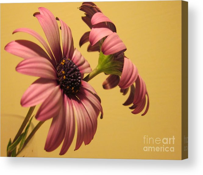 Acrylic Print featuring the photograph Pretty In Pink by Miss McLean