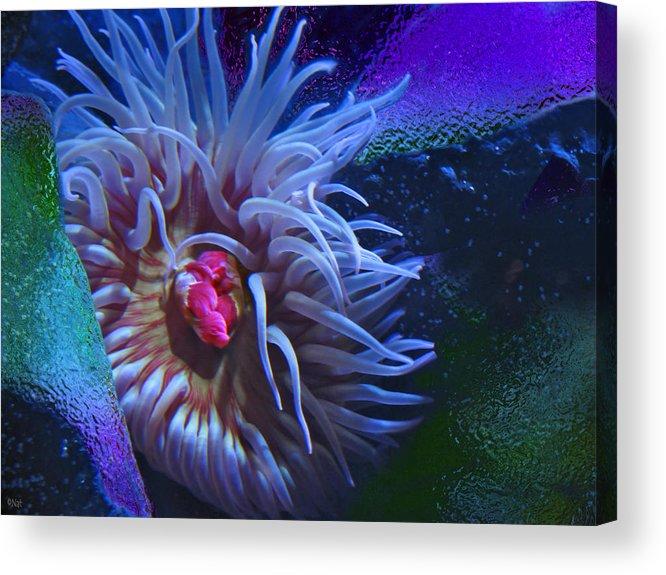 Sea Anemone Acrylic Print featuring the photograph A Sea Anemone by Natalya Shvetsky