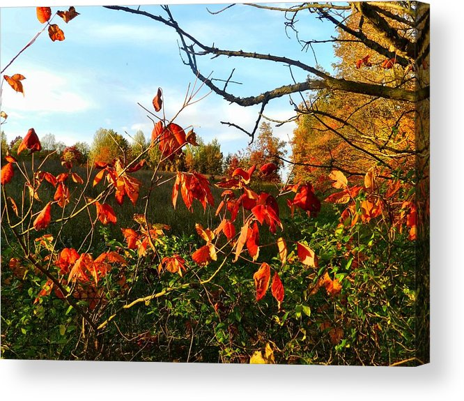 Autumn Acrylic Print featuring the photograph A Splash Of Red II by Julie Dant