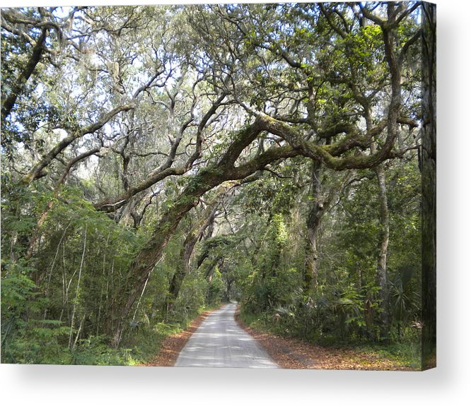 Quiet Road Acrylic Print featuring the photograph Amelia's Canopy by Patricia Williams