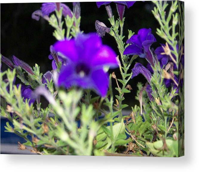 Flowers Acrylic Print featuring the photograph Blue Wonders by Regina McLeroy