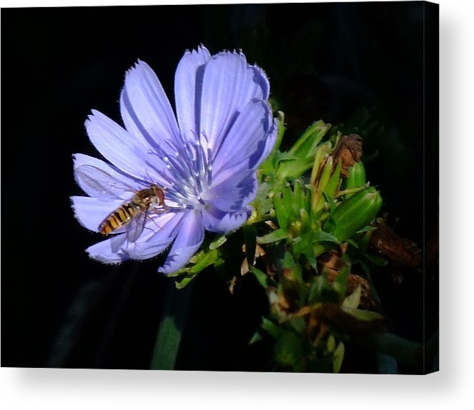 Bee Acrylic Print featuring the photograph Buzzy In Blue by Alison Richardson-Douglas