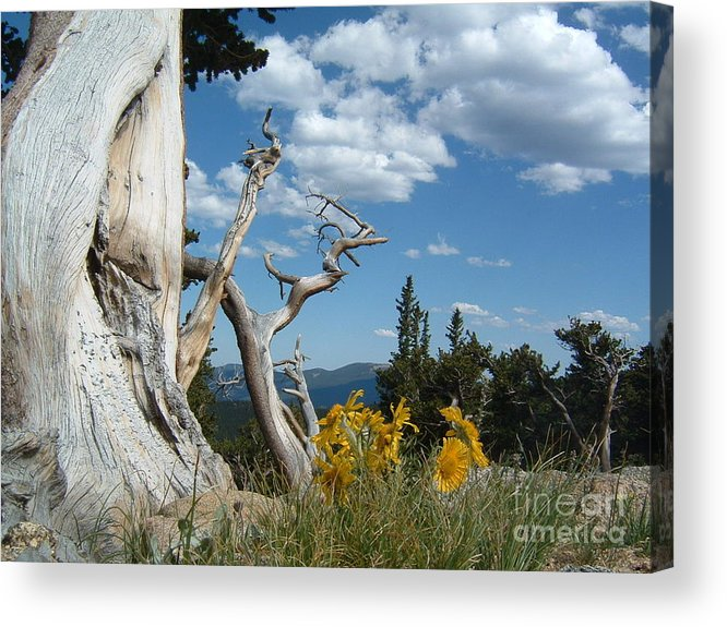 Colorado Acrylic Print featuring the photograph Colorado Hillside by Bev Veals
