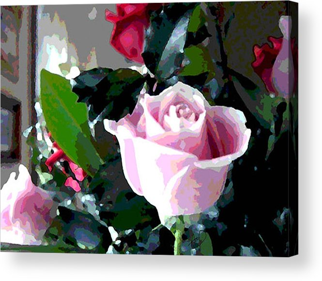 Cape Cod Acrylic Print featuring the painting Cropped Clipped Pink by Douglas Auld