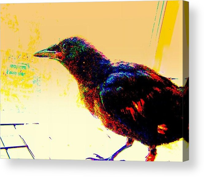 Crow Acrylic Print featuring the mixed media Crow Walk by YoMamaBird Rhonda