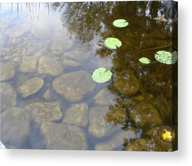 Meditation Acrylic Print featuring the photograph Daydreams by Trishia Gibson