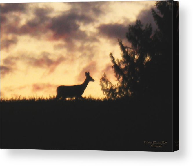 Deer Acrylic Print featuring the photograph Deer Silhouette by Darlene Bell