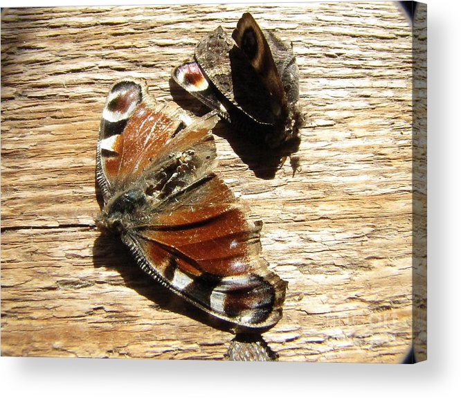 Nature Acrylic Print featuring the photograph Die Death On Table by Yury Bashkin