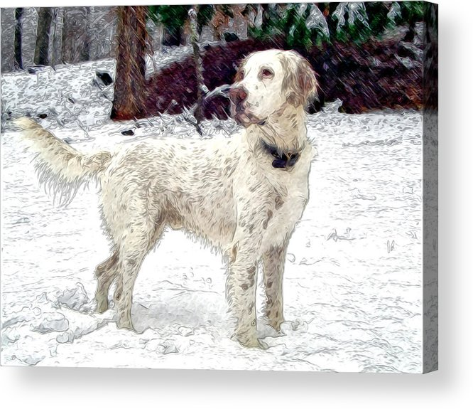 Mixed Media. Mixed Media Photography. Mixed Media Dighta Art. Mixed Media Digtal Photography. White Bird Dog Photography. Bird Dog Digtal Art. Bird Dog In Snow. Hunting Bird Dog Photography. Bird Dog Posing Photography. Bird Dog Pointing Photography. Acrylic Print featuring the photograph Duke by James Steele
