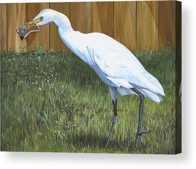 Cattle Egret Acrylic Print featuring the painting Eye To Eye by AnnaJo Vahle