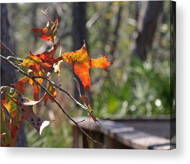 Fall Acrylic Print featuring the photograph Fall by Lou Belcher