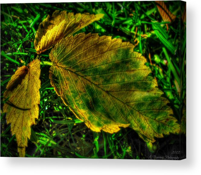 Yavapai County Courthouse Acrylic Print featuring the photograph Fallen Elm Leaves by Aaron Burrows
