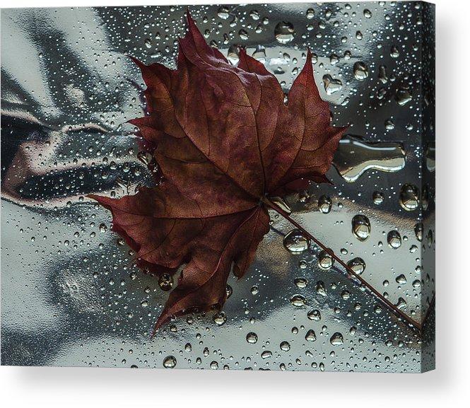 Still Life Acrylic Print featuring the photograph Fallen Leaf by Vladimir Kholostykh